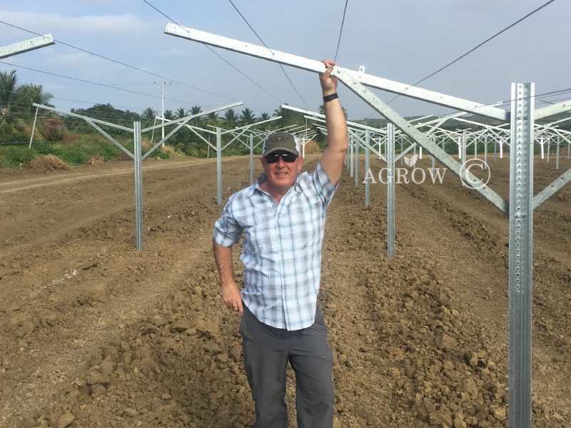 AGROW VINEYARD TRELLIS SYSTEM Ecudor Project